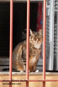 Cat-behind-Bars-Aix-SAM_8411